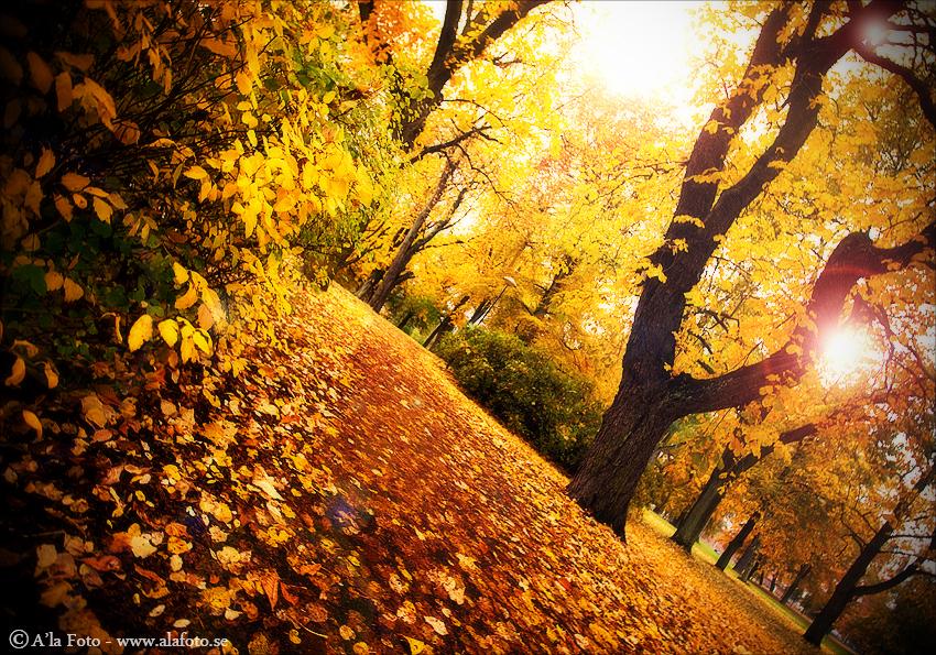 Copyright Anneli Larsson www.alafoto.se