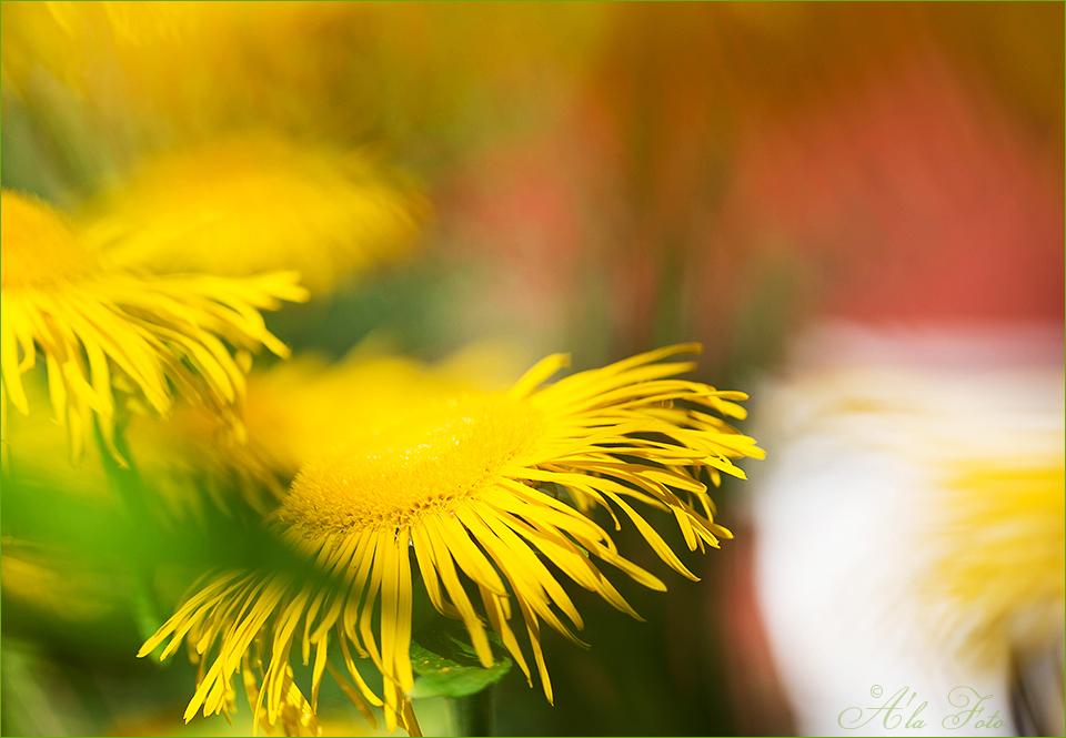 blommig_fredag_solen