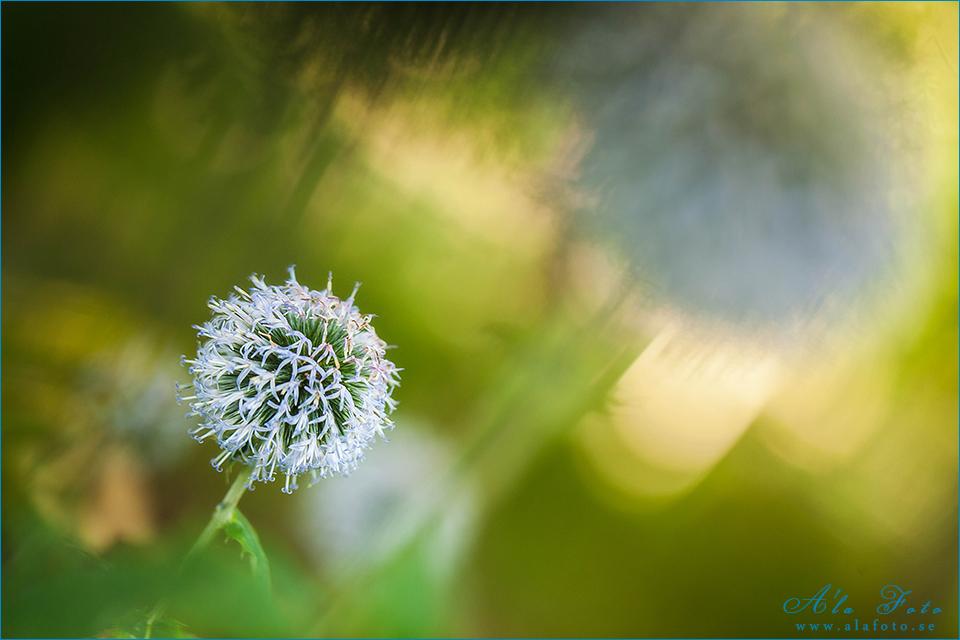 blommigfredag_talamod_