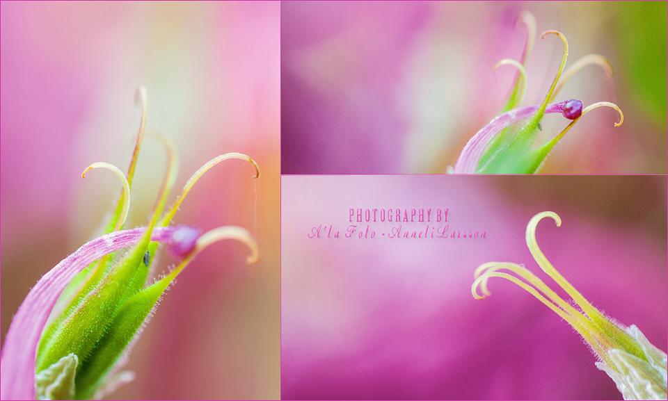 fototriss_narganget_blompistiller