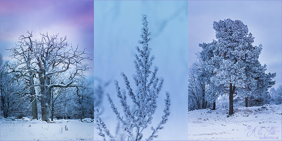 fototriss_vinter