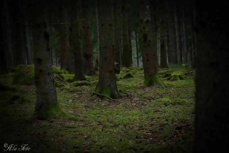 idenmorkaskogen