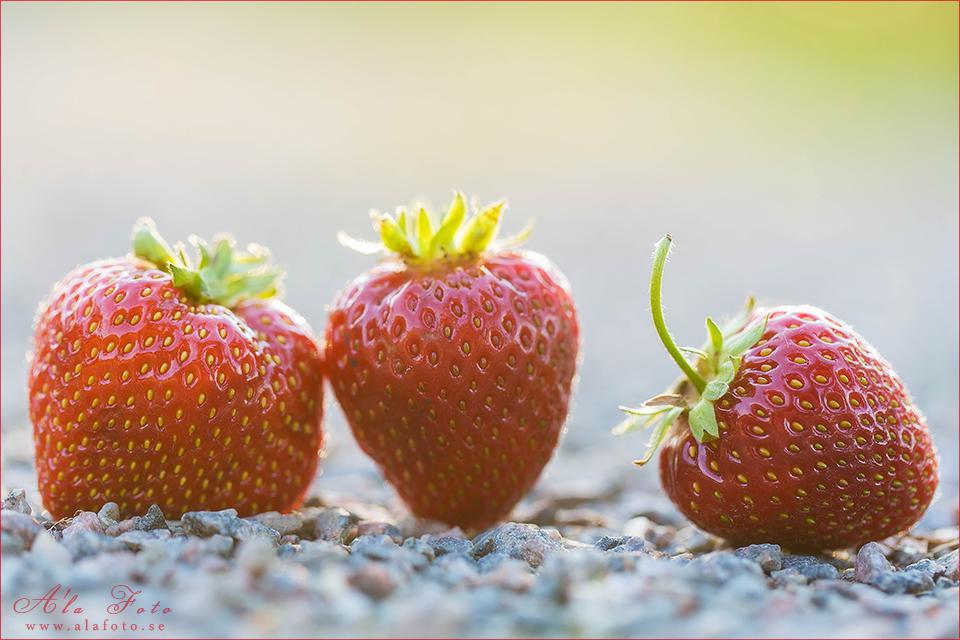 jordgubbar_1