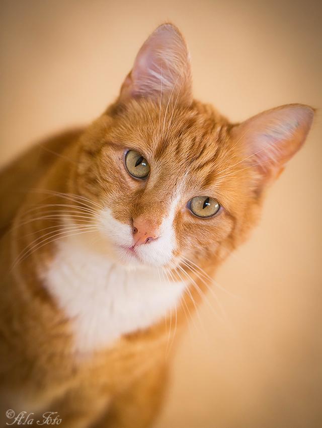 kattportratt_oskar