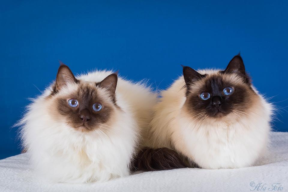kattungarnasfodelsedag