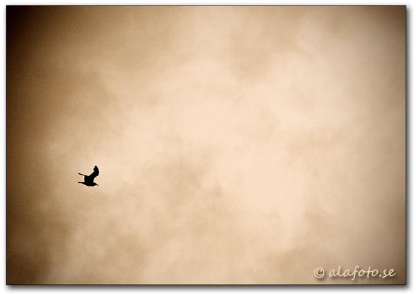 minimalism1.jpg