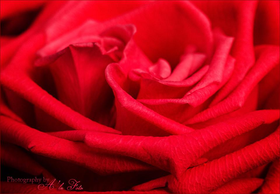 ordlos_valentine