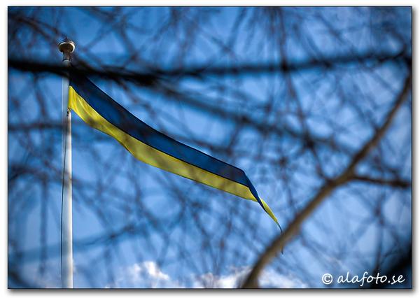plommonflaggan.jpg
