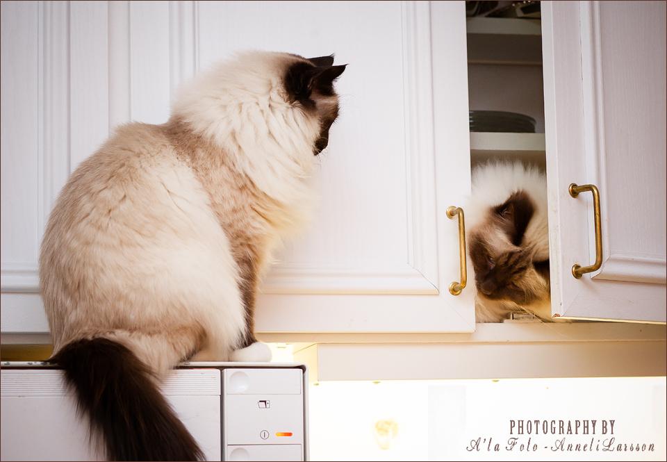 tisdagstema_oppen_katterna