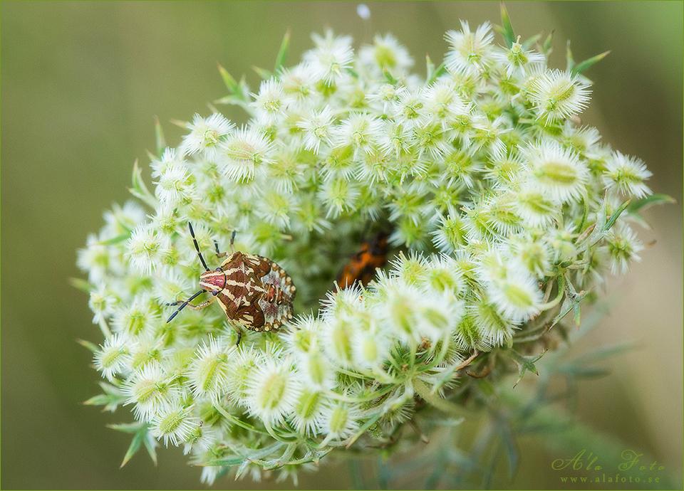 tisdagstema_utforska_insekter